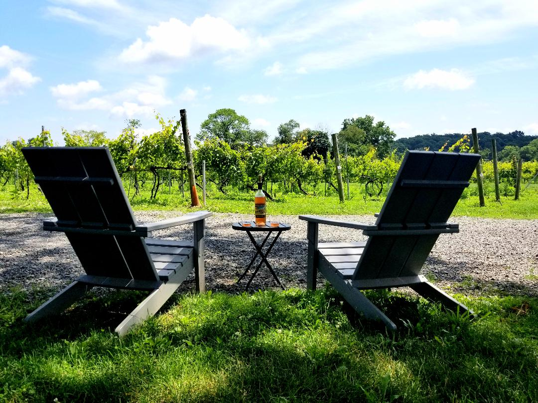 Vineyard Views with Wine