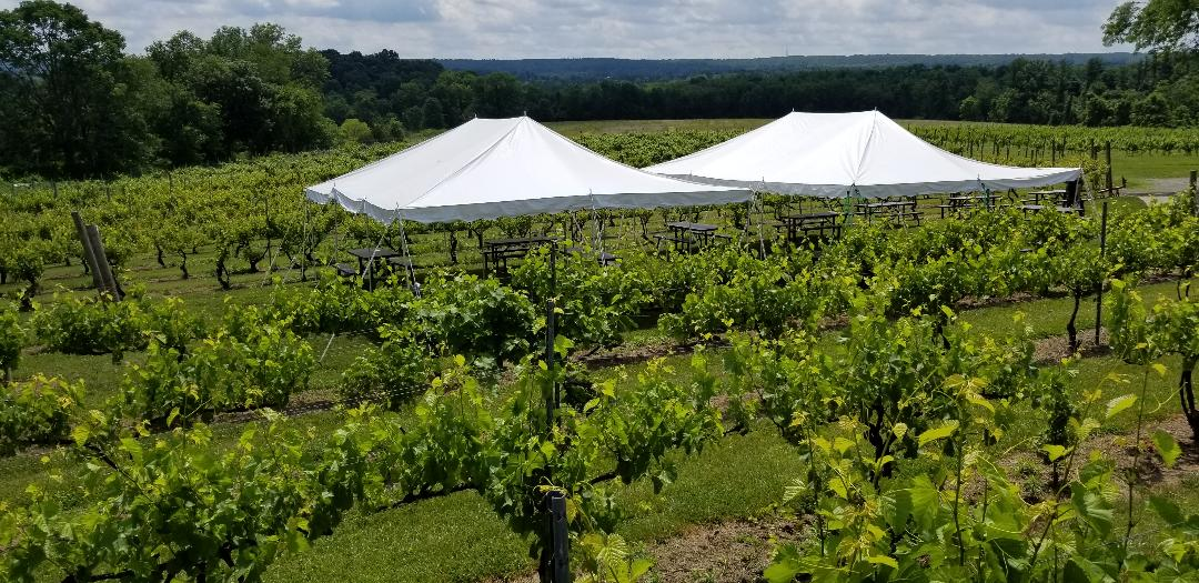 Covered seating in the Vineyards